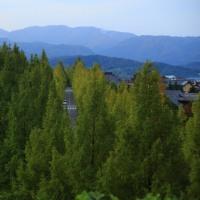 金沢市 太陽が丘の秋