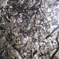 4月6日~4月11日の日替わり弁当🎵