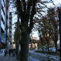 再び中山道を歩く 浦和宿~大宮宿~上尾宿 2