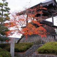 忍城の紅葉