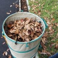 落ち葉堆肥作り6日目。