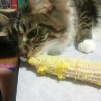 トウモロコシが好き。