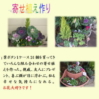 寄せ植えを作る