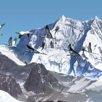 越冬する鶴(アネハヅル)の勇気と気概を私たちも学ばなければなりません