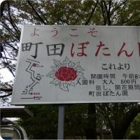 町田:ぼたん園~えびね苑(ぼたん園編)