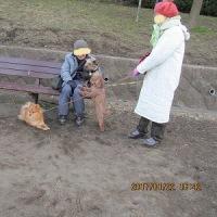 一月二十二日の公園-初めまして、くるみ君(プードル)、アインシュタイン君(ポメ)