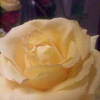 シャンソン歌手リリ・レイLILI LEY  シャンソンの稽古場花達と仲間たち