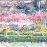 桃の吉備路