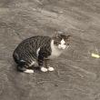 ネコとランニング