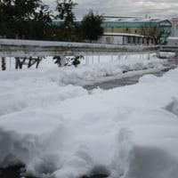 120年ぶり?の大雪