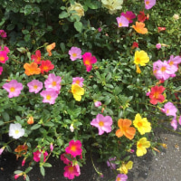 色のない世界には花を