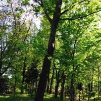 5ヶ月振りの森林浴♪Part1