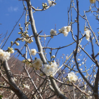 スポコミ・カワラ版 3月28日(火)先負