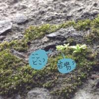 雨の日、小さな草。
