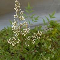 ヒッソリと咲く花たち