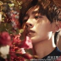 王青@weibo