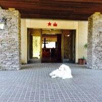 大山レークホテルの看板犬ガイナ☆