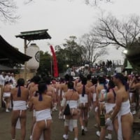 Aichi / Konomiya Naked Festival ( 国府宮はだか祭り)