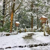 今日のしらやまさん、雪。