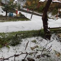 昨日初雪が降りました
