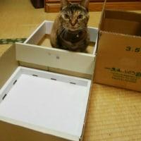 大好きな箱の中
