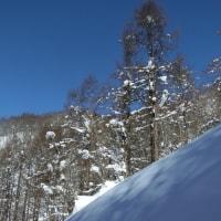 大幽洞窟の氷筍  2月16日