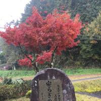 紅葉し始めて綺麗にグラディジョン