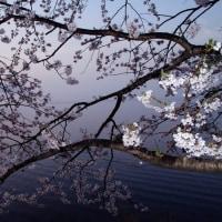 2017桜Ⅱ