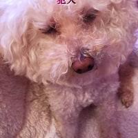kawaii☆くまちゃん柄のロンパース♪…キャワワ~(●^o^●)