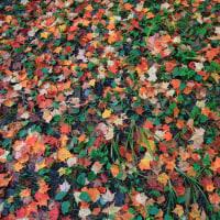 横谷渓の秋彩探し