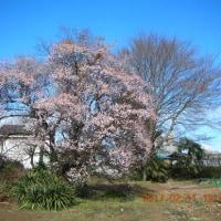 梅の花が綺麗でした(^.^)