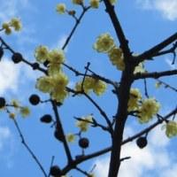 おだやかな春が♪