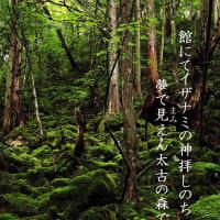 太古の森で