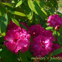 花フェスタで出逢ったお花たち