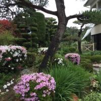 夏支度の庭に