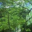 緑のミラージュ
