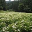 御杖村の半夏生園