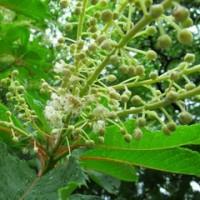 日本庭園の植物観察会