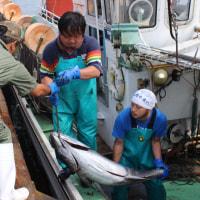 2016年10月号 表紙の写真 マグロ延縄漁の荷揚げ風景(松前漁港)