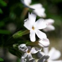 再び花の写真・パート2