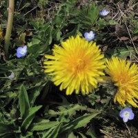 春は黄色の花から。