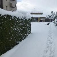 2017/01/15(日) 大雪は肩透かし