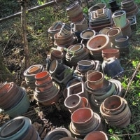 大量の植木鉢をいただく
