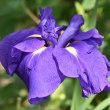 1643 庭の花(2916)開花記録