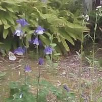 庭の花と甘酒
