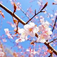 早春の新宿御苑