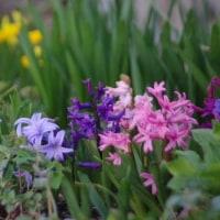 ブルー&パープルのお花たち♪