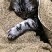 【コラム】ドタキャンくらった夜は猫と戯れる