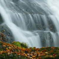 11月25日 晩秋の滝