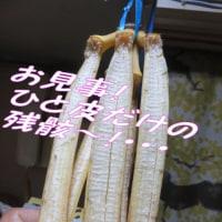 「バナナが落ちた日!」・・・・何でやねん?・・&梅雨時期に自然系弁当~「森の癒しパスタ~」・・